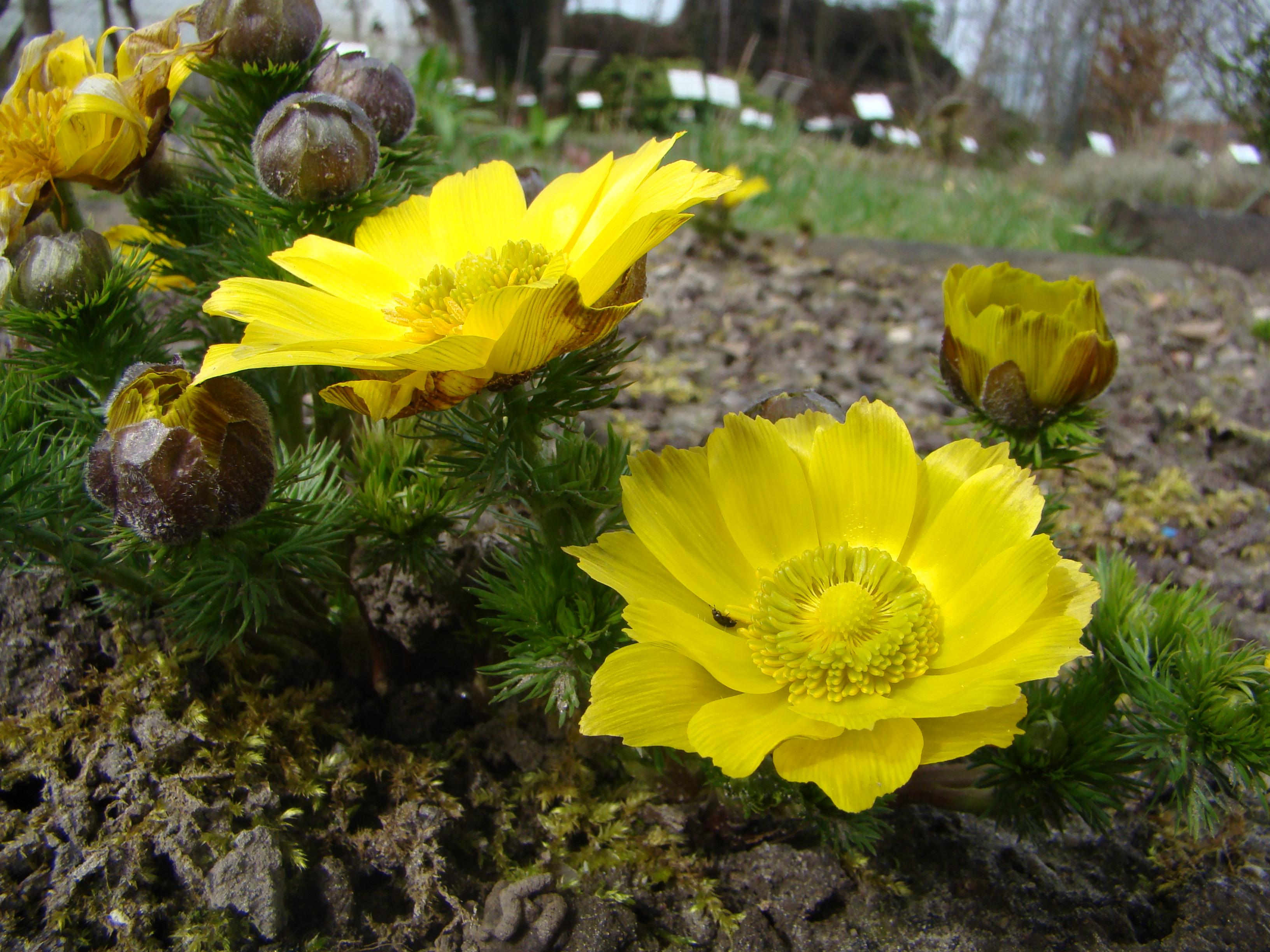 Plantes menac es et cueillette conservatoire national for Recherche plante
