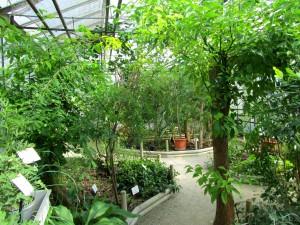La serre tropicale