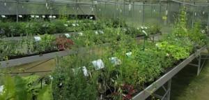 La pépinière de vente de plants