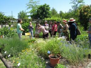 Visite guidée des Rendez-vous au Jardin
