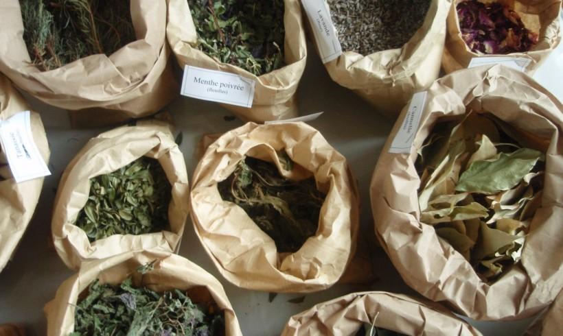 Ateliers adultes «Plantes à parfum» – 27 et 31 mai