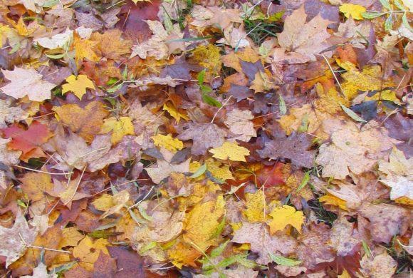Couleurs d'automne – Haies et plantes ligneuses du Conservatoire