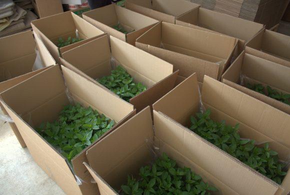 Offre d'emploi «Technicien vente de plants»
