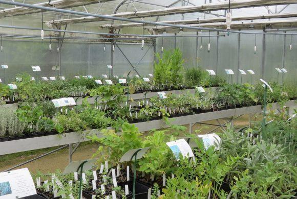 Plus de 180 espèces et variétés en vente dans la pépinière