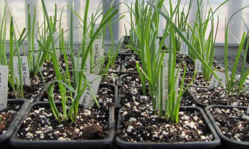 Acheter des graines et des plants