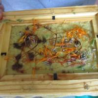 Atelier plantes à fibres