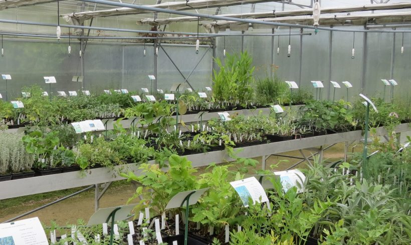 (Français) Plus de 180 espèces et variétés en vente dans la pépinière
