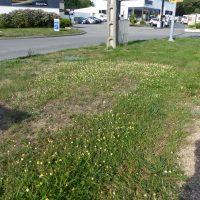 Espace vert urbain à Combrit (29)