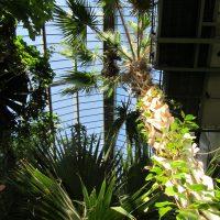 Jardin Botanique de Lyon - Grandes serres