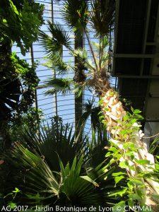 Jardin botanique de Lyon - Grande serre