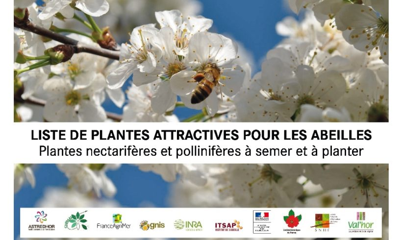 Publication – Liste de plantes attractives pour les abeilles