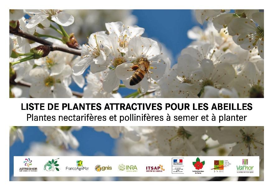 Liste de plantes attractives pour les abeilles