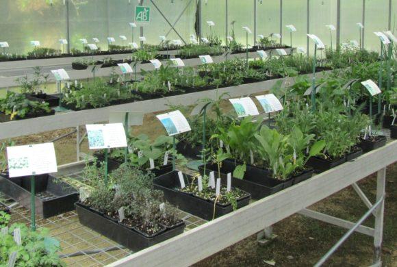 Du nouveau dans la pépinière de vente de plants