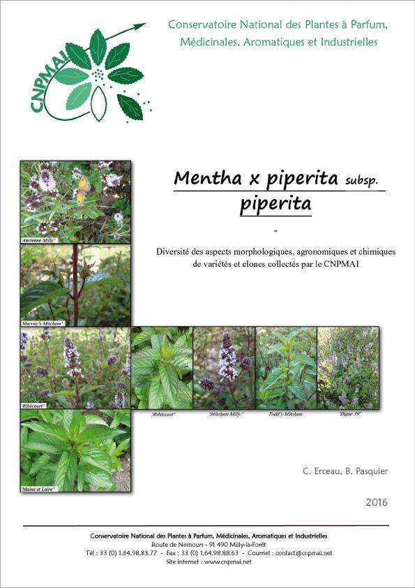 publication-menthe-poivree