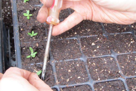 Commandes de semences et plants, de la production à l'expédition