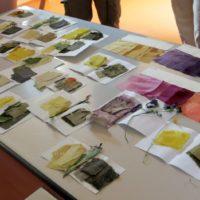 2018-07-07- stage teintures vegetales (3)