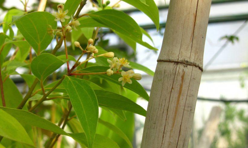 Ateliers adultes « Les plantes à épices » – 26 et 29 septembre