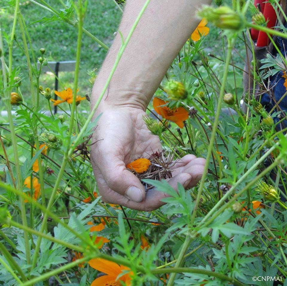 Stage Produire ses plants et graines