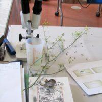 Stage initiation à la botanique 22-23 aout (5)