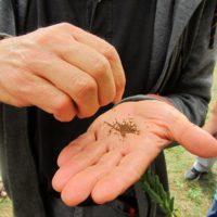 Stage produire ses plants et graines fin août (1)