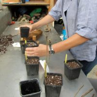 Stage produire ses plants et graines fin août (10)