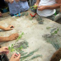 Stage produire ses plants et graines fin août (8)