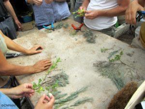 stage produire ses emences et plants