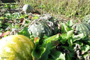 Jardins d'octobre (3)