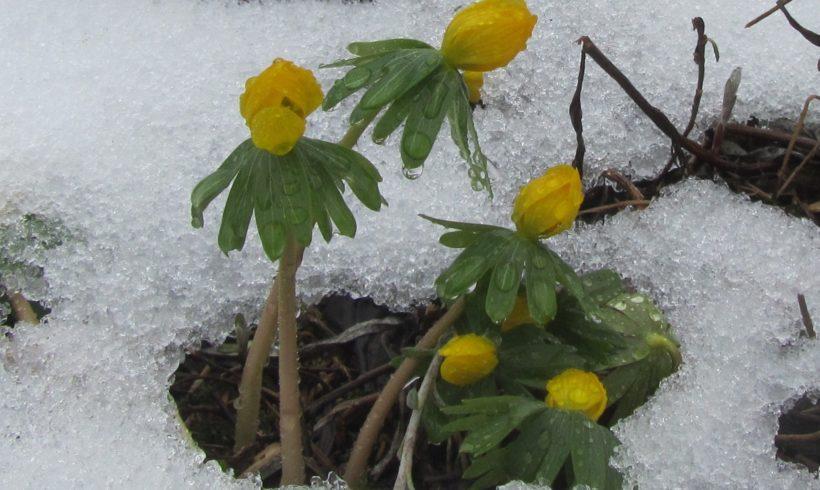 (Français) Les activités du Conservatoire en hiver