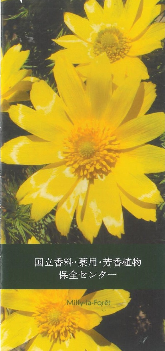 Brochure CNPMAI japonais couv