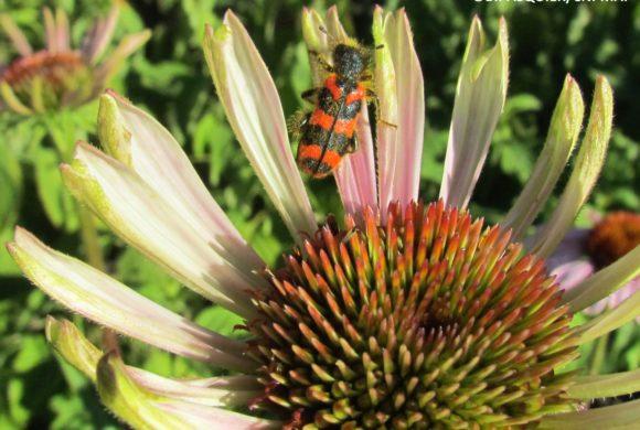 Concours photo « Plantes et insectes »
