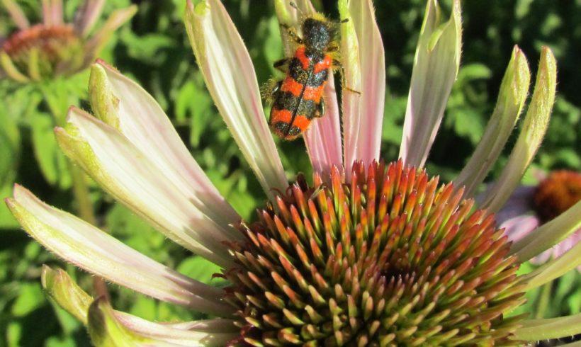(Français) Concours photo « Plantes et insectes »