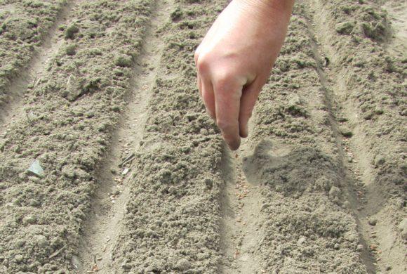 L'implantation des pépinières de semences