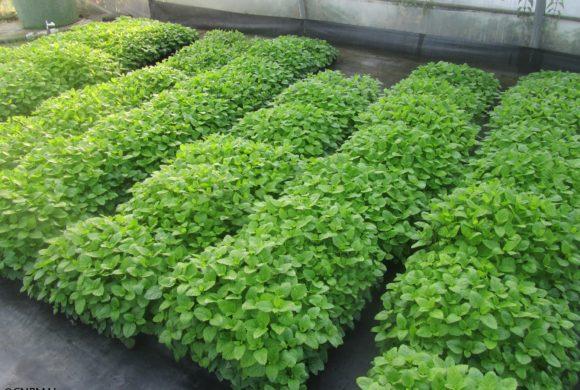 Bilan de la saison de production de plants