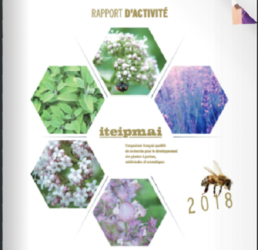 L'iteipmai publie son rapport d'activités annuel