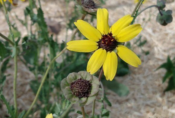 (Français) Récolte de semences : de la fleur à la graine