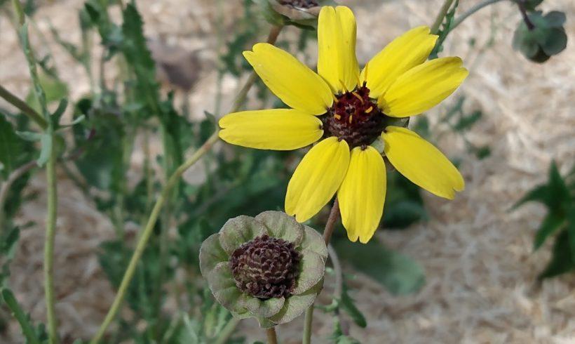 Récolte de semences : de la fleur à la graine