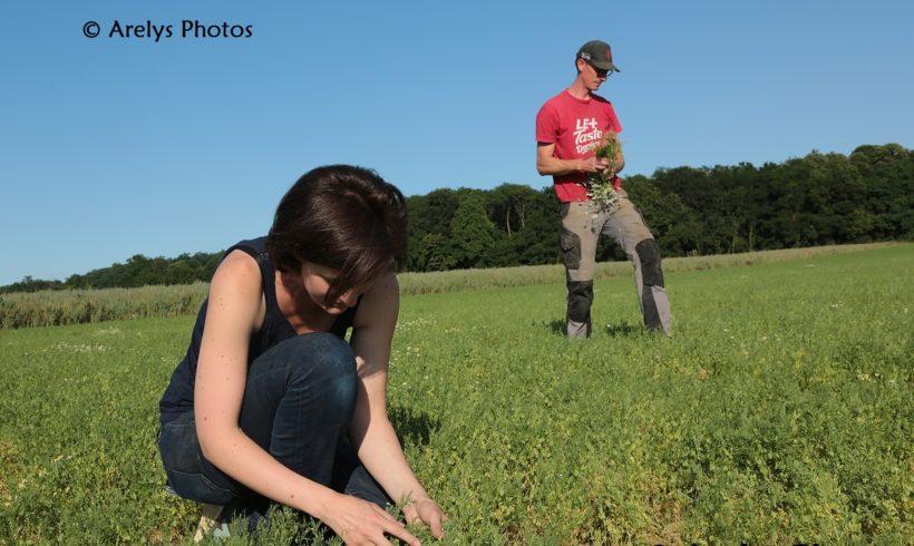 (Français) #3 Emile, c'est l'histoire d'une graine… de quinoa !