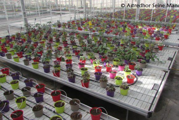 Projet de développement d'une gamme de plantes aromatiques en pot produits localement pour les marchés parisiens