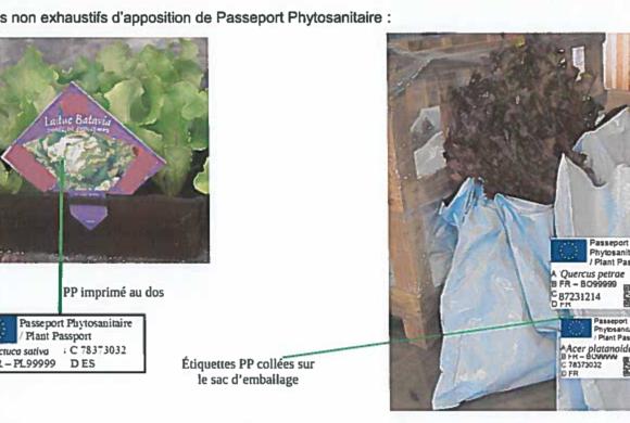 (Français) Information règlementaire : évolution du Passeport Phytosanitaire Européen au 14 décembre 2019