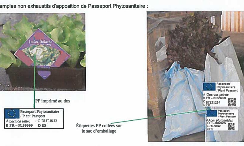 Information règlementaire : évolution du Passeport Phytosanitaire Européen au 14 décembre 2019