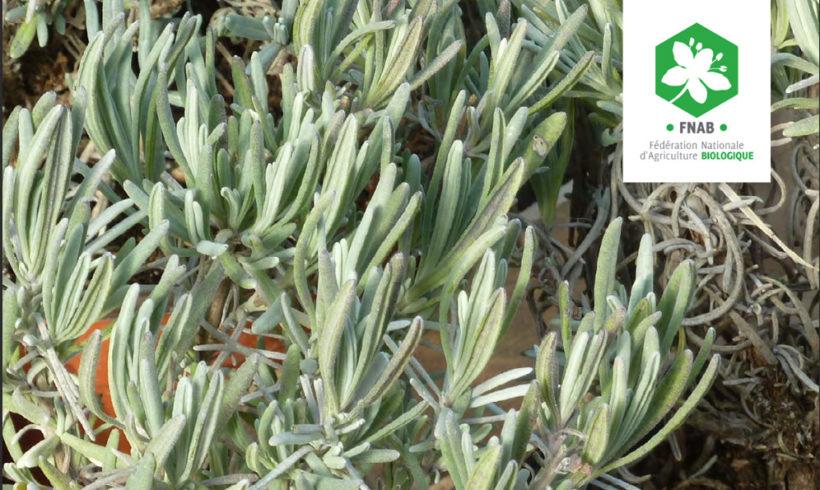 Produire, cueillir et transformer des Plantes à Parfum, Aromatiques et Médicinales diversifiées