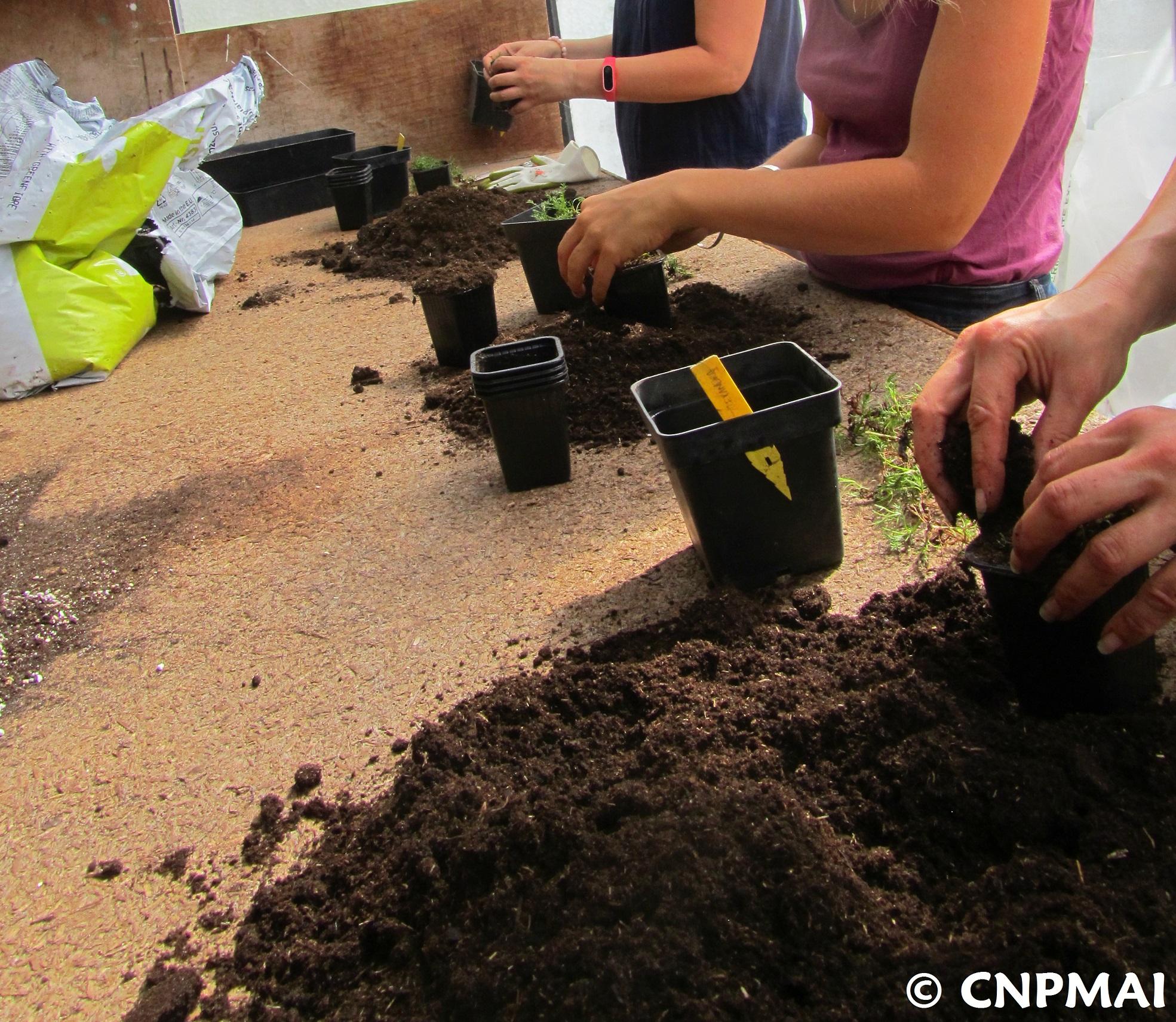 Stage produire ses semences et plants