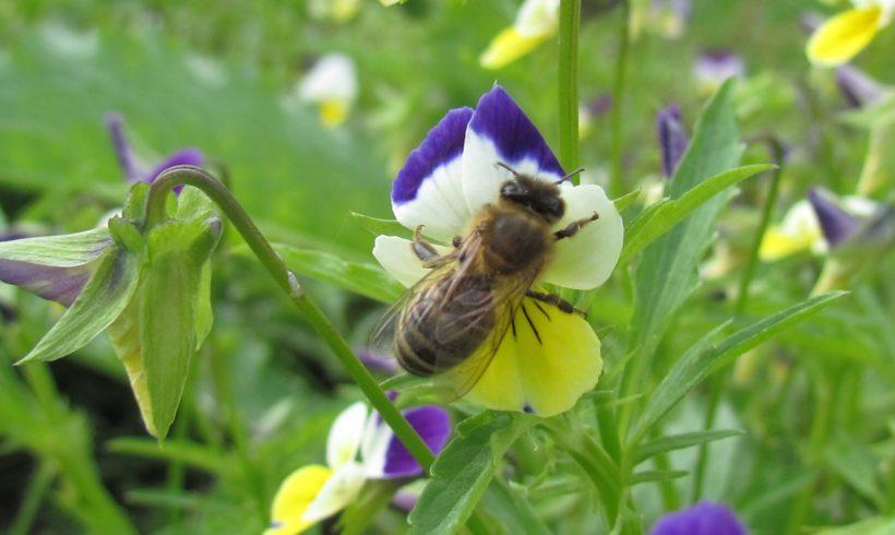 (Français) Nouveau : Stage « Initiation à l'apiculture et aux abeilles sauvages »