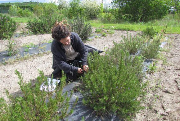 (Français) Offre d'emploi : Jardinier botaniste