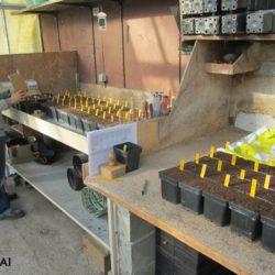 Préparation des semis pour les commandes