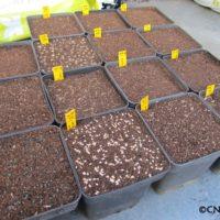 (Français) Les semis ont démarré : n'oubliez pas d'envoyer vos demandes de devis plants