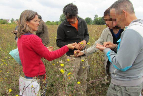 Focus sur : Sarah Martineau, intervenante du stage « Produire des semences et plants de PPAM »