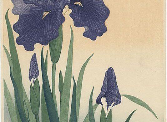 (Français) Art et nature : Les iris d'Ohara Koson