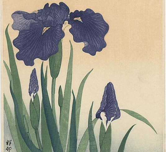 Art et nature : Les iris d'Ohara Koson